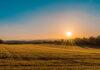 Chwasty i ich nasiona są niezwykle odporne na zwalczanie